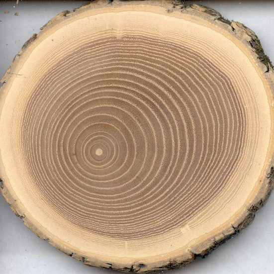small red oak[1]